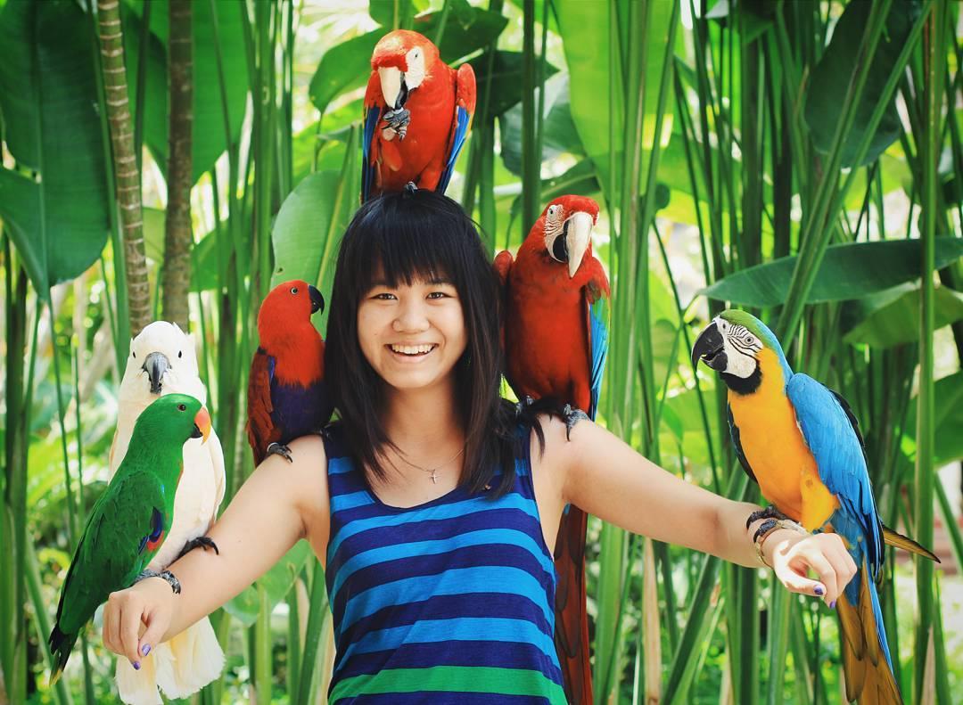 Bali Bird Park, Wisata Edukasi yang Menyenangkan dan Menarik Bersama Keluarga
