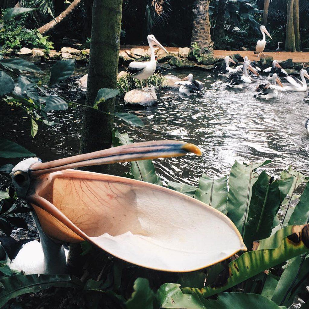 Bali Bird Park 3 1024x1024 » Bali Bird Park, Wisata Edukasi yang Menyenangkan dan Menarik Bersama Keluarga