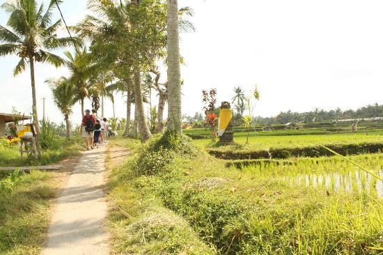 Bali Bird Walk Ubud 1 » Bali Bird Walk, Cara Unik dan Berbeda Menikmati Keindahan Alam Ubud
