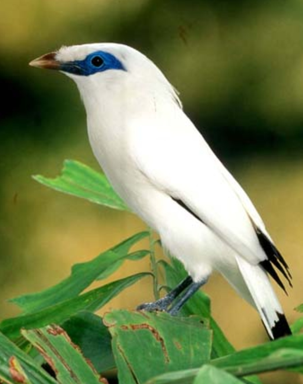 Bali Bird Walk Ubud