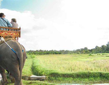 Bali Elephant Camp Plaga