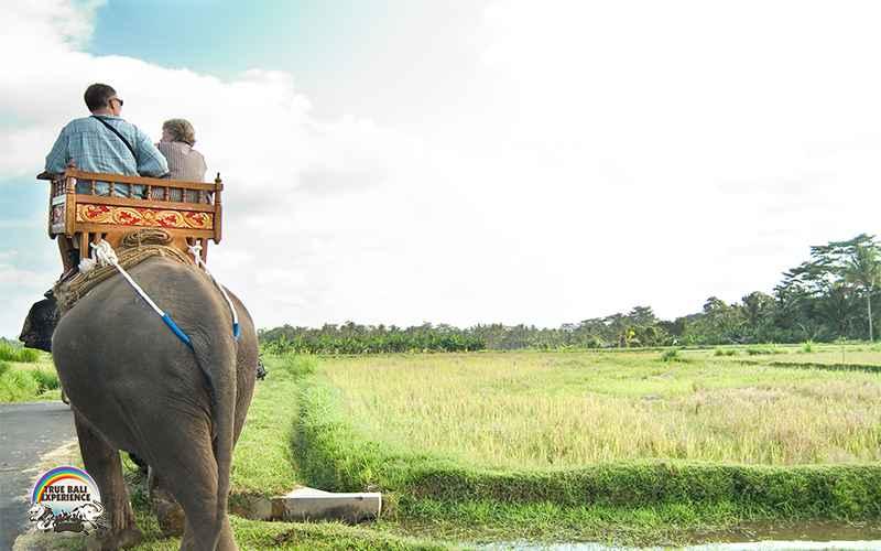 Bali Elephant Camp Plaga, Pengalaman Tak Terlupakan Bermain-main dengan Gajah