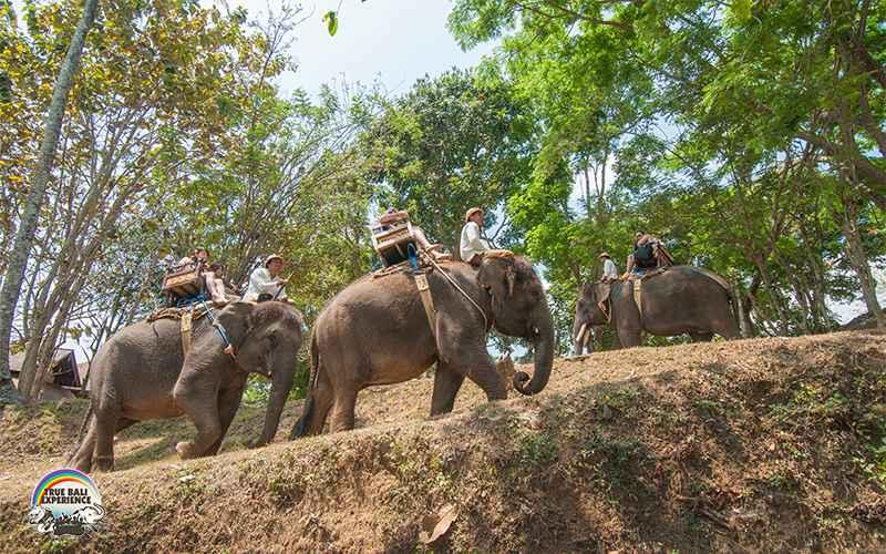 Bali Elephant Camp Plaga 3 » Bali Elephant Camp Plaga, Pengalaman Tak Terlupakan Bermain-main dengan Gajah