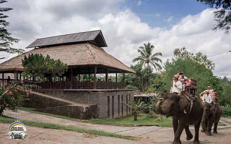 Bali Elephant Camp Plaga 4 » Bali Elephant Camp Plaga, Pengalaman Tak Terlupakan Bermain-main dengan Gajah