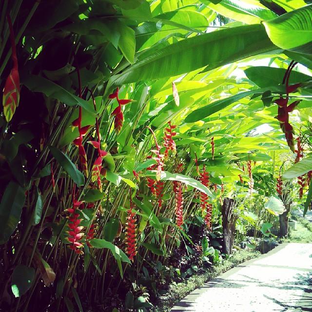 Bali Orchid Garden 1 » Menyaksikan Keindahan Bunga Anggrek di Bali Orchid Garden