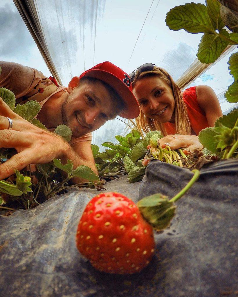Bali Strawberry Farm and Restaurant 4 820x1024 » Bali Strawberry Farm and Restaurant, Kulineran Sambil Metik Buah Stroberi Menarik Loh