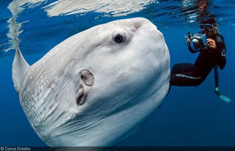 Berenang Bersama Ikan Mola Mola 2 » Berenang Bersama Ikan Mola-Mola, Aktivitas Seru Saat Liburan ke Nusa Penida