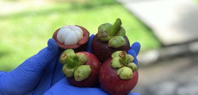 buah manggis Bali