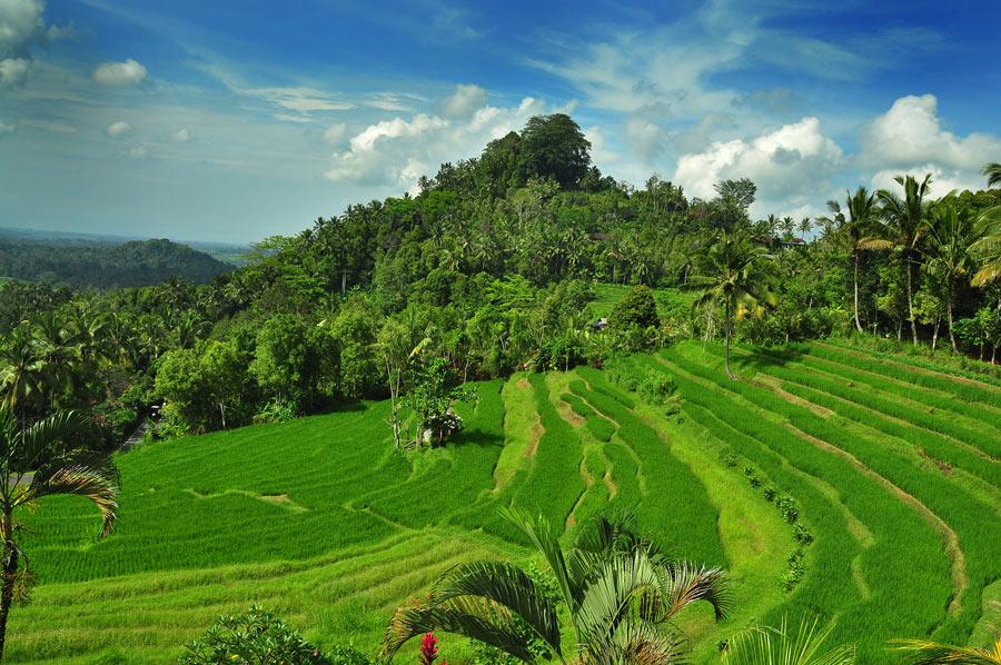 Bukit Jambul Karangasem 2 » Bukit Jambul Karangasem, Pemandangan Hijau Menyejukkan Mata di Bali