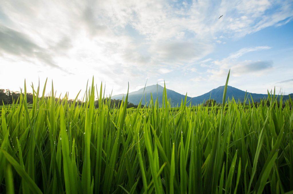 Catur Wana Jatiluwih 1 1024x680 » Mengenal Konsep Catur Wana, Pemanfaatan Alam yang Menjadi Rahasia Warga Jatiluwih Bali