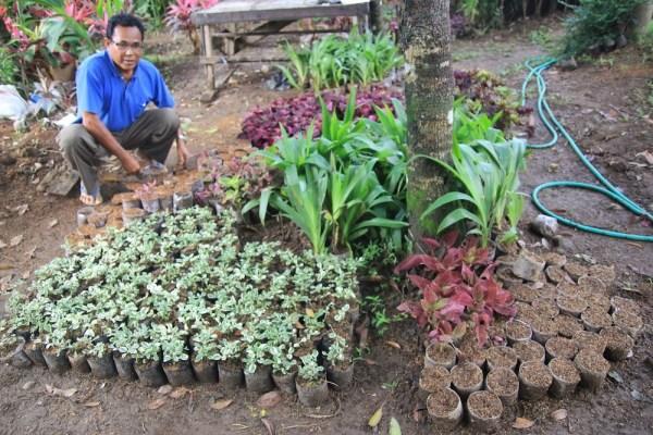 Desa Petiga Tabanan 1 » Menelusuri Keunikan Desa Petiga Tabanan, Desa Sentra Tanaman Hias di Bali
