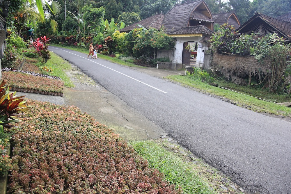 Menelusuri Keunikan Desa Petiga Tabanan, Desa Sentra Tanaman Hias di Bali