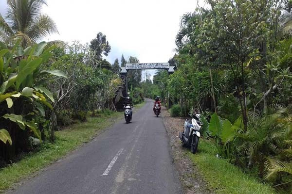 Desa Petiga Tabanan 3 » Menelusuri Keunikan Desa Petiga Tabanan, Desa Sentra Tanaman Hias di Bali