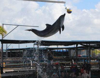 Dolphin Lodge Serangan Bali