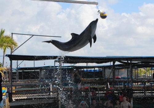 Mau Berenang Bersama Lumba-Lumba? Ke Dolphin Lodge Serangan Bali Saja!