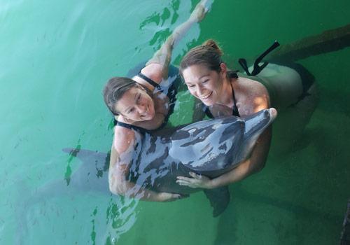 Dolpin Lodge Serangan Bali 2 » Mau Berenang Bersama Lumba-Lumba? Ke Dolphin Lodge Serangan Bali Saja!