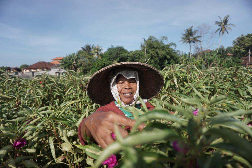 Ekowisata Subak Sembung Peguyangan 3 1024x684 » Jogging sambil Menjelajahi Sawah Hijau di Ekowisata Subak Sembung Peguyangan