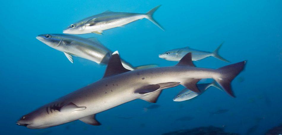 Gili Mimpang Padangbai, Tempat Diving Favorit untuk Memperoleh   Kesempatan Bertemu Ikan Mola-Mola