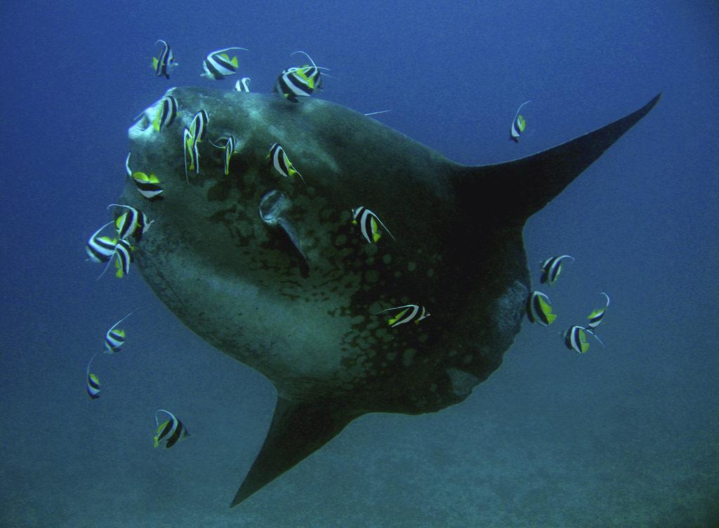 Gili Mimpang Padangbai 3 1024x752 » Gili Mimpang Padangbai, Tempat Diving Favorit untuk Memperoleh   Kesempatan Bertemu Ikan Mola-Mola