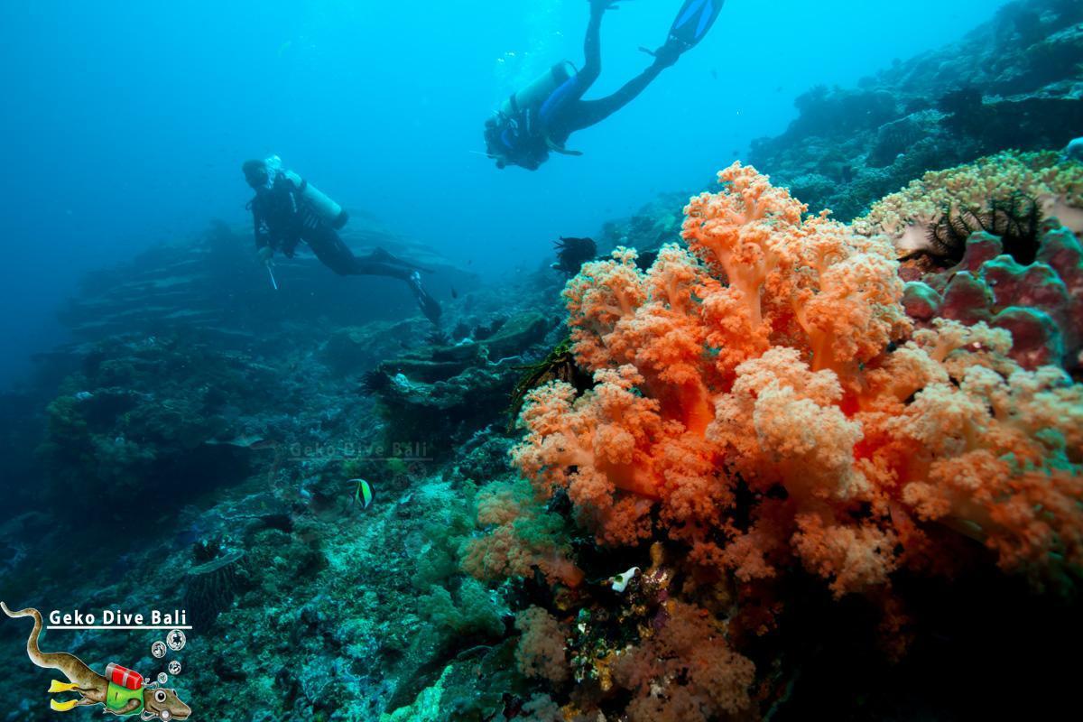 Gili Tepekong Padang Bai, Pengalaman Menikmati Alam Bawah Laut Tercantik di Bali