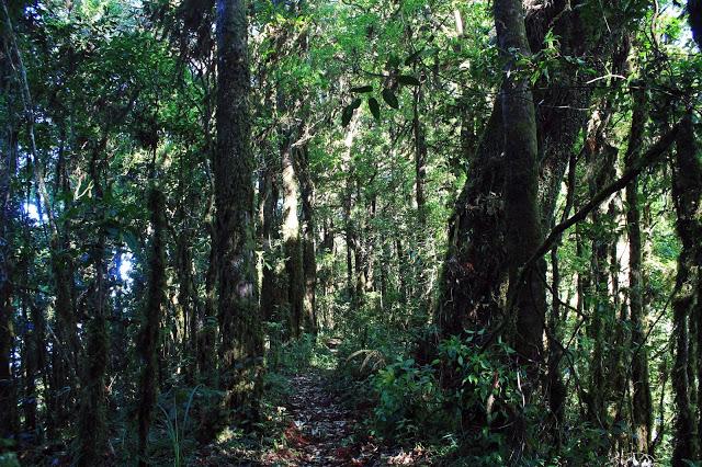 Gunung Lesung Bali 3 » Suasana Misterius dan Sakral Hutan Lumut di Gunung Lesung Bali
