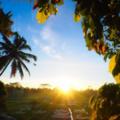 Hars Garden Tree Houses Ubud