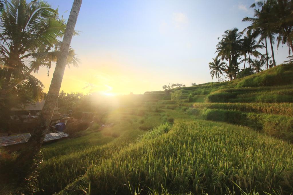 Hotel The Sunset House Ubud, Penginapan Alami dengan Sajian Pemandangan Matahari Terbenam Memukau