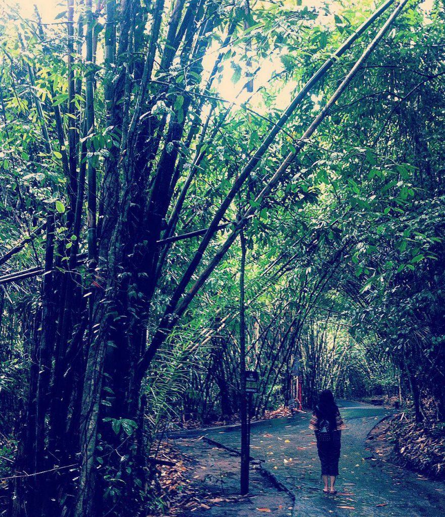 Hutan Bambu Penglipuran Bangli 1 881x1024 » Hutan Bambu Penglipuran Bangli, Tempat Wisata Instagramable di Bali
