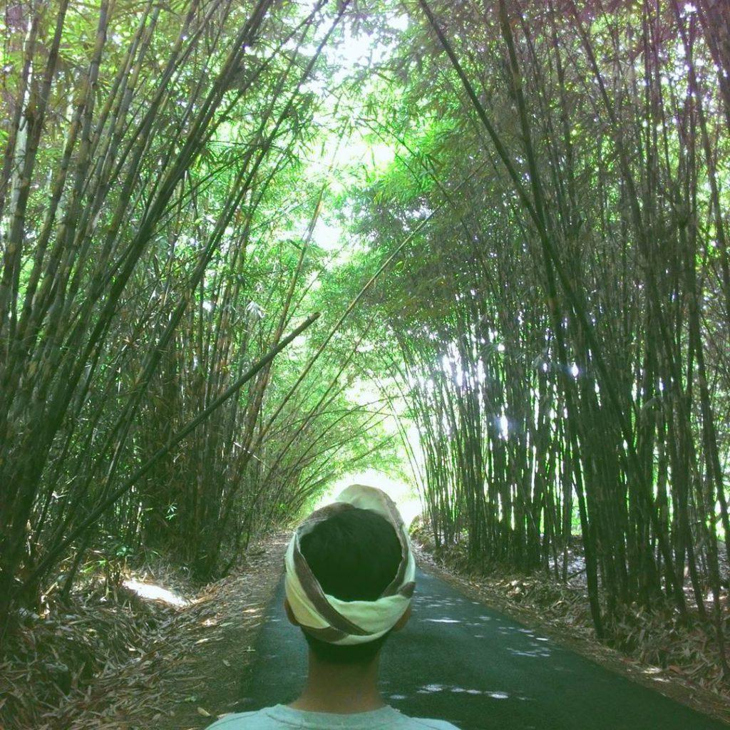 Hutan Bambu Penglipuran Bangli 3 1024x1024 » Hutan Bambu Penglipuran Bangli, Tempat Wisata Instagramable di Bali