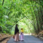 Hutan Bambu Penglipuran Bangli