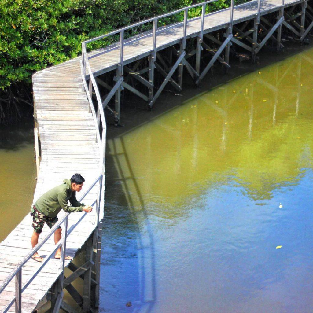 Hutan Mangrove Taman Hutan Raya Ngurah Rai Bali 1 1 1024x1024 » Wisata Alam Hutan Mangrove Taman Hutan Raya Ngurah Rai Bali yang Menakjubkan