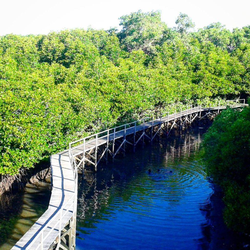 Hutan Mangrove Taman Hutan Raya Ngurah Rai Bali 3 1024x1024 » Wisata Alam Hutan Mangrove Taman Hutan Raya Ngurah Rai Bali yang Menakjubkan
