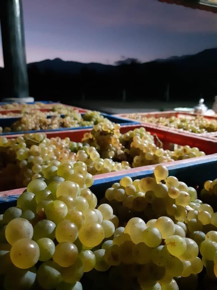 Kebun Anggur Hatten Wines