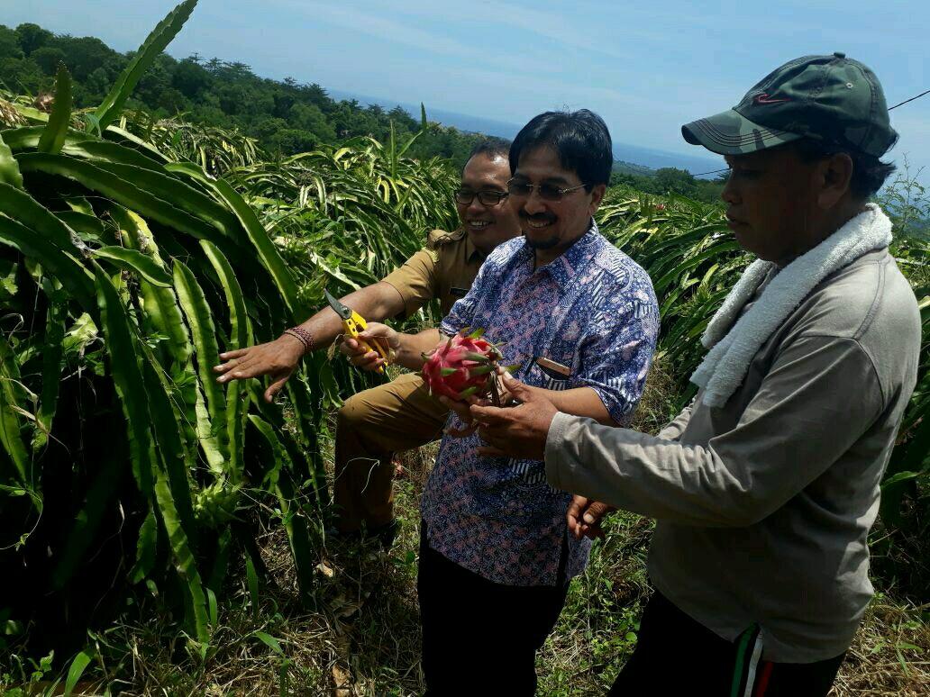Agrowisata Kebun Buah Naga Mengwitani, Pilihan Suasana Liburan Baru di Bali