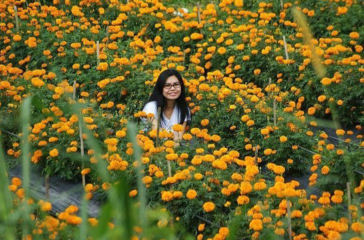 Kebun Bunga Gumitir Desa Plaga 2 » Wisata Murah Menyaksikan Kebun Bunga Gumitir Desa Plaga di Bali