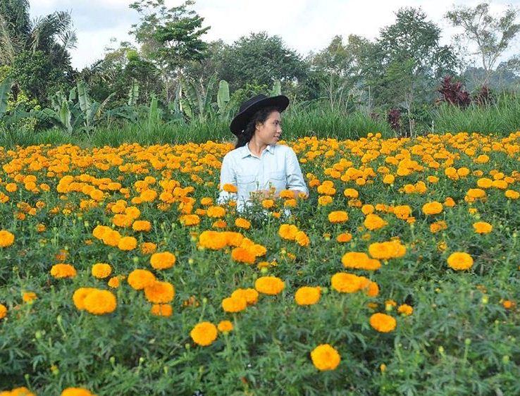 Wisata Murah Menyaksikan Kebun Bunga Gumitir Desa Plaga di Bali
