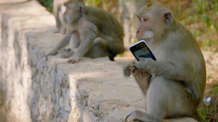 Kelakuan Monyet di Uluwatu 2 » Fakta Unik Kelakuan Monyet di Uluwatu, Mencuri Barang untuk Ditukar Makanan