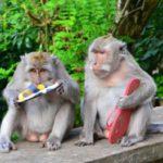 Kelakuan Monyet di Uluwatu