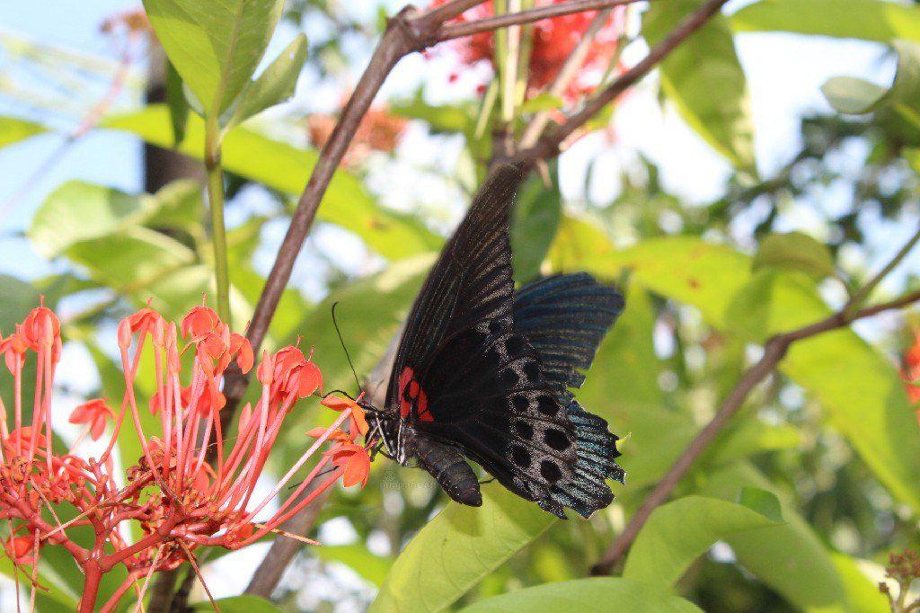 Kemenuh Butterfly Park Gianyar 1 1024x682 » Kemenuh Butterfly Park Gianyar, Wisata Cantik Bermain dengan Kupu-Kupu yang Menyegarkan Mata