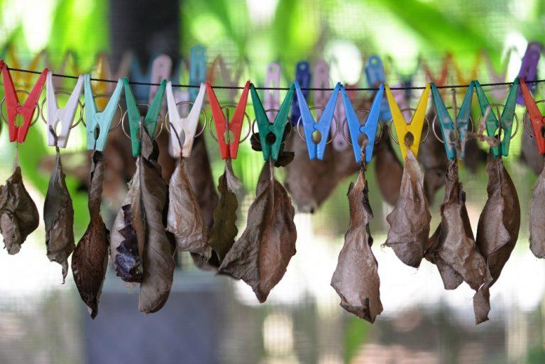 Kemenuh Butterfly Park Gianyar 2 » Kemenuh Butterfly Park Gianyar, Wisata Cantik Bermain dengan Kupu-Kupu yang Menyegarkan Mata