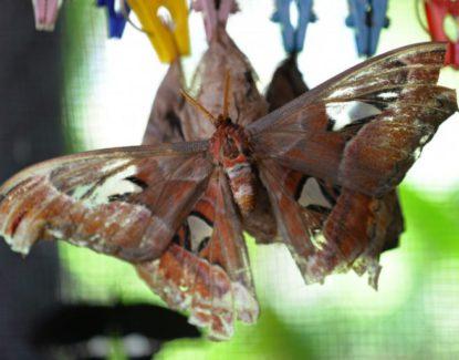 Kemenuh Butterfly Park Gianyar