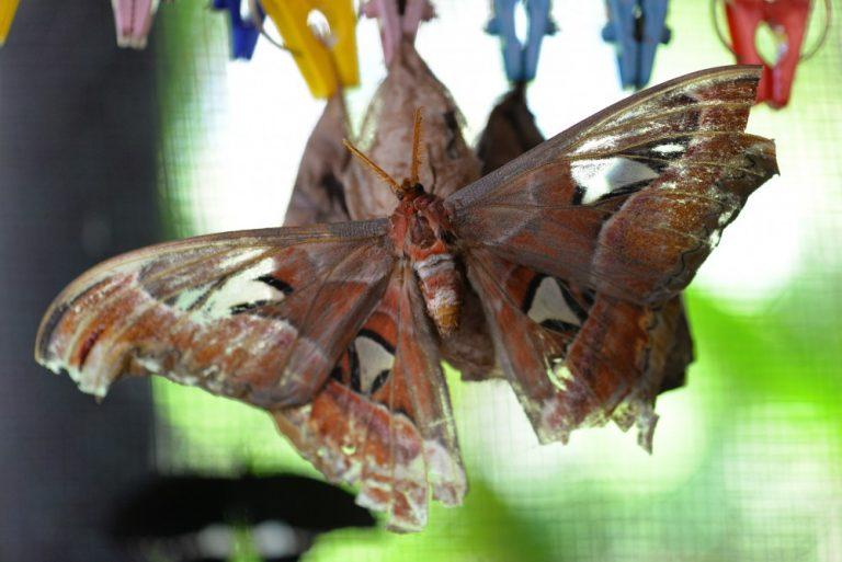 Kemenuh Butterfly Park Gianyar, Wisata Cantik Bermain dengan Kupu-Kupu yang Menyegarkan Mata