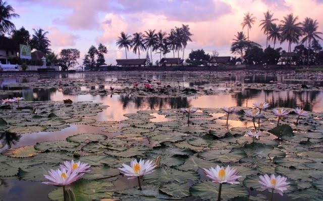 Kolam Bunga Teratai di Bali 3 » Menikmati Keindahan Kolam Bunga Teratai di Bali, Ini Destinasi yang Bisa Anda   Tuju!