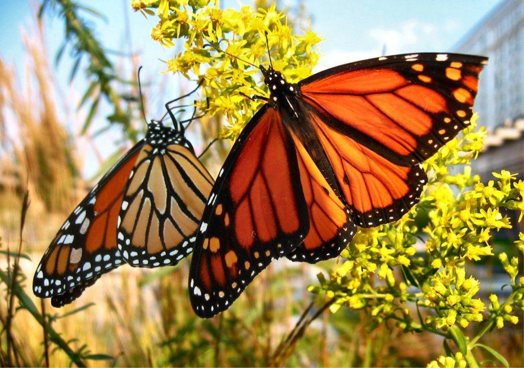 Kupu-kupu cantik yang bisa dijumpai di Taman Kupu-Kupu Bali