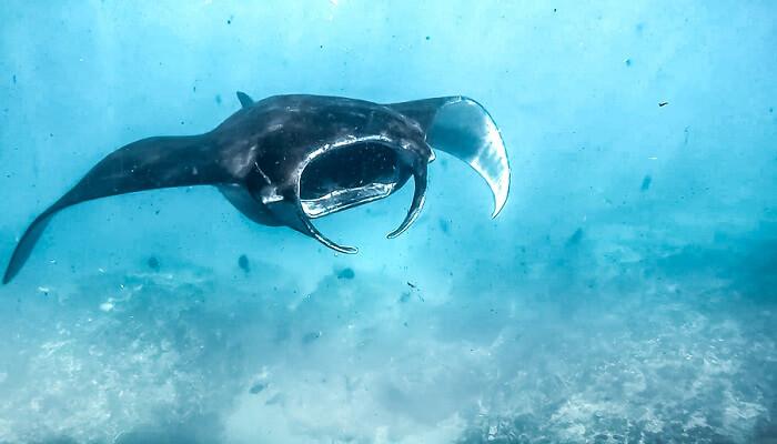 Malibu Point Nusa Penida 1 » Malibu Point Nusa Penida, Spot Diving Terbaik dengan Kekayaan Biota Laut Melimpah