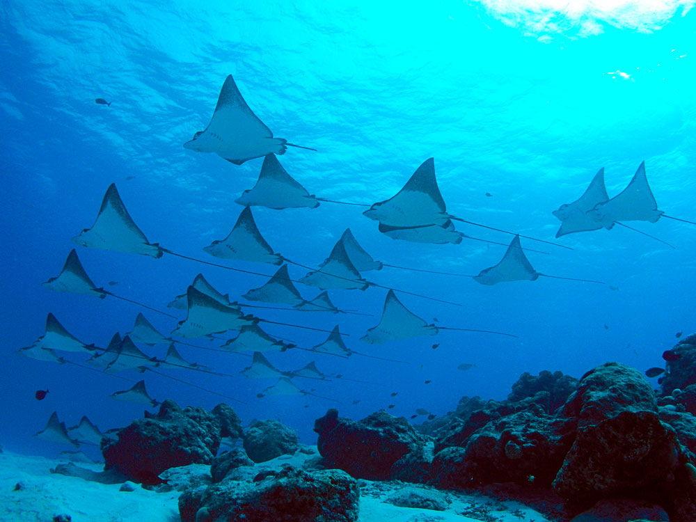 Malibu Point Nusa Penida, Spot Diving Terbaik dengan Kekayaan Biota Laut Melimpah