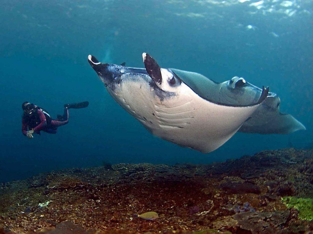 Malibu Point Nusa Penida 3 1024x768 » Malibu Point Nusa Penida, Spot Diving Terbaik dengan Kekayaan Biota Laut Melimpah