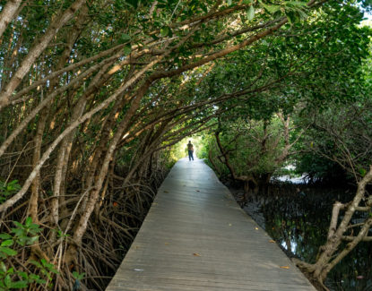 Mangrove Boardwalk Denpasar