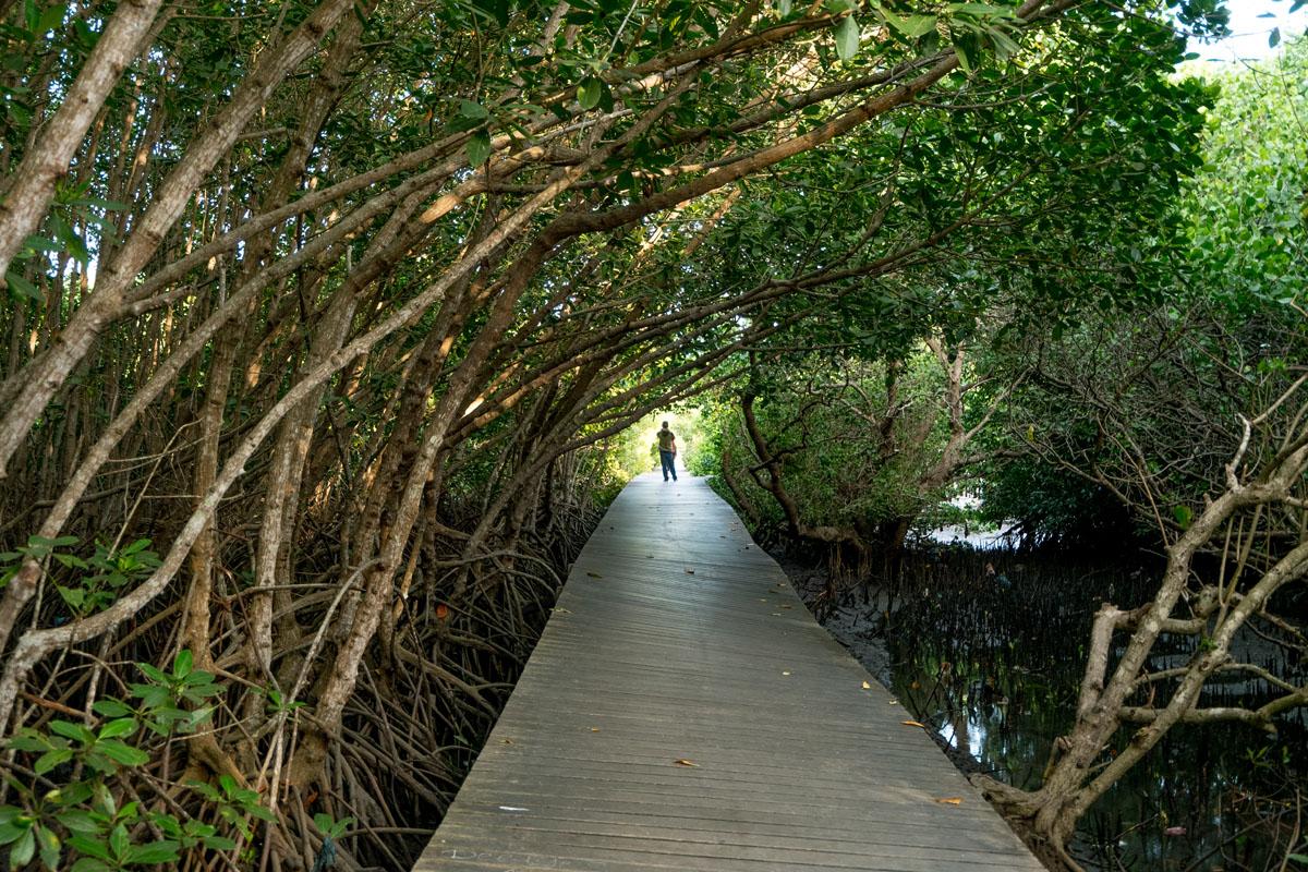 Mangrove Boardwalk Denpasar, Wisata Alam dengan Pemandangan Menakjubkan di Bali