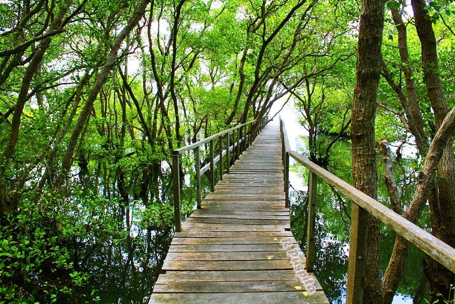 Mangrove Boardwalk Denpasar 2 » Mangrove Boardwalk Denpasar, Wisata Alam dengan Pemandangan Menakjubkan di Bali